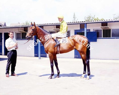 Racehorse Charlottown with Jockey Scobie Breasley